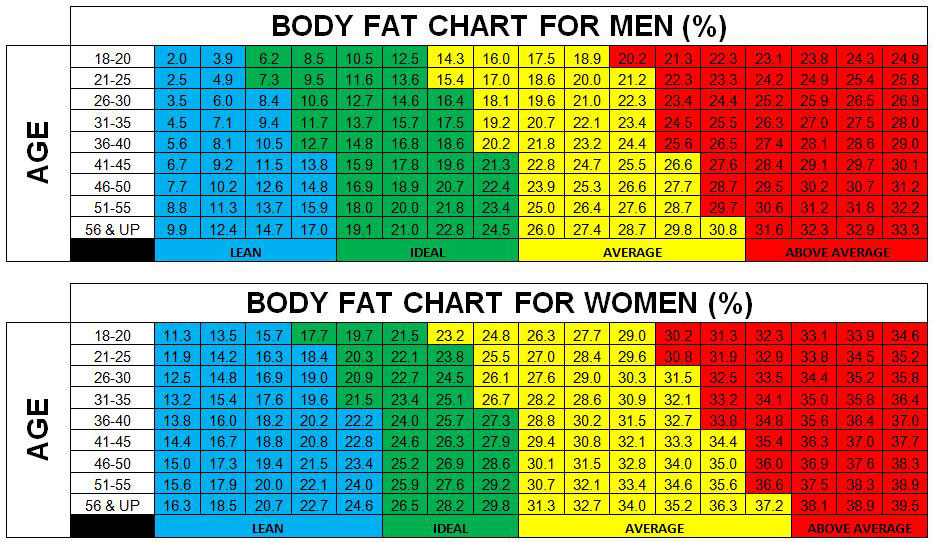 Body Fat Percentage Chart Template | Dexa Scan Body Composition Report